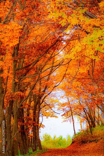Tunel jesiennych liści