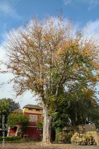Fototapeta California, USA-December 12,2018: The garden at Winchester house is ghost house