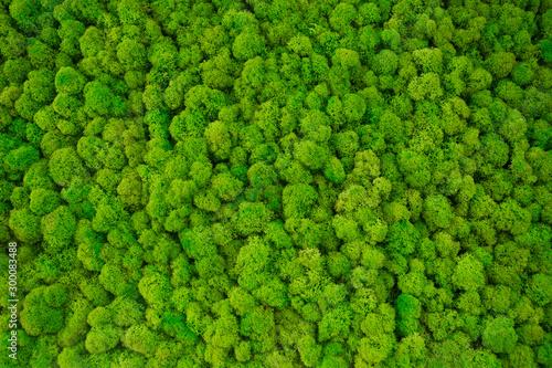 Photo decorative moss for interior decoration.