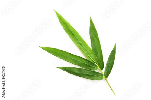 Fresh bamboo leaves isolated on white background.