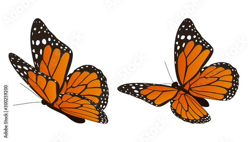 Stampa su Tela The monarch butterfly vector illustration