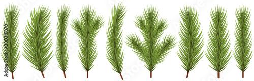 Fotografía fir branch collection for christmas designs