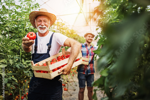 Happy grandfather working together with his grandson in family greenhouse business Fototapeta