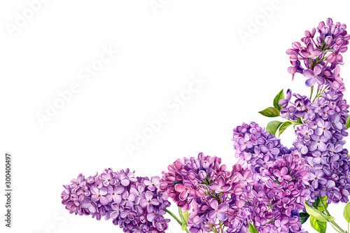 Valokuvatapetti frame of lilac flowers on an isolated white background, watercolor illustration,