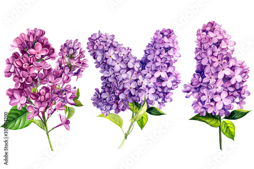 Canvas-taulu set of lilac flowers on white isolated background, watercolor painting, hand-dra