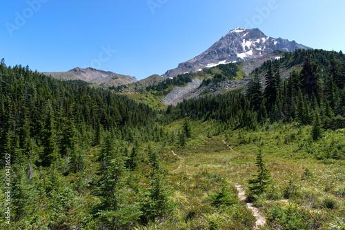 Slika na platnu Looking up an alpine meadow to Mt