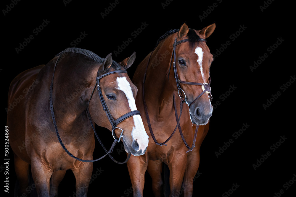 Horse on Black Background <span>plik: #300524869 | autor: Terri Cage </span>
