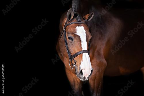 Canvas-taulu Horse on Black Background
