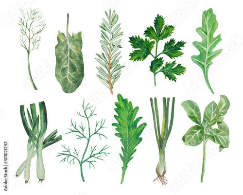 Cuadros en Lienzo Watercolor set of greens for salad