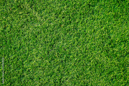 Fototapeta Green grass texture can be use as background