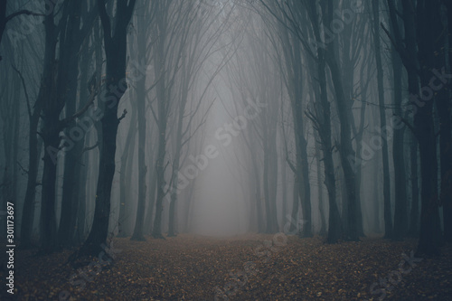 Forest in fog with mist. Fairy spooky looking woods in a misty day. Cold foggy morning in horror forest with trees