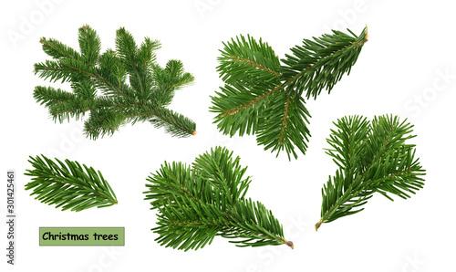 Photo christmas trees isolated on white background