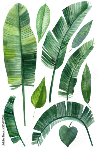 Leinwand Poster set of palm green leaves, tropical plants on an isolated white background, water