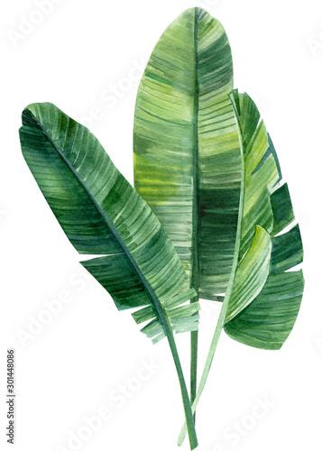 Fototapeta Ilustracja Liścia Palmowego