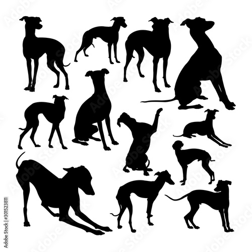 Fotografiet Italian greyhound dog animal silhouettes