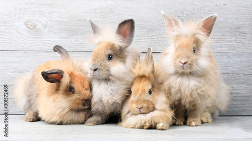 Obraz na płótnie Group of lovely bunny easter rabbits on wooden background