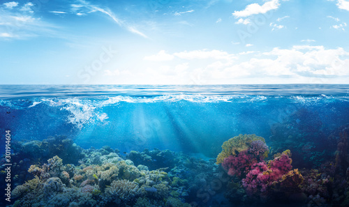 Fotografiet background of beautiful coral reef with marine tropical fish visited here