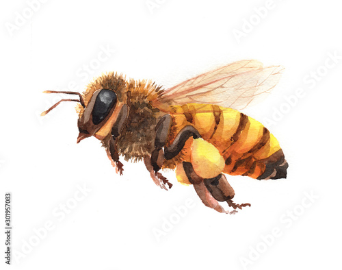Foto Watercolor single bee insect animal isolated on a white background illustration