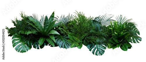 Green leaves of tropical plants bush (Monstera, palm, rubber plant, pine, bir...
