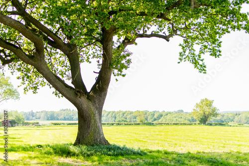Obraz na płótnie tree