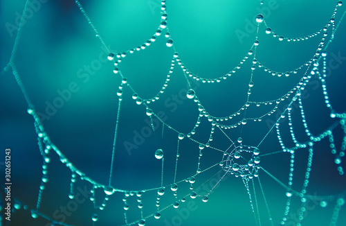 Photo Spider web covered in morning dew drops, beautiful in cold winter morning colorf