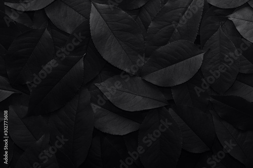 Black background. Background from autumn fallen leaves closeup. Black and whi...