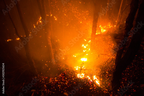Forest fire burning trees at night. Fototapet