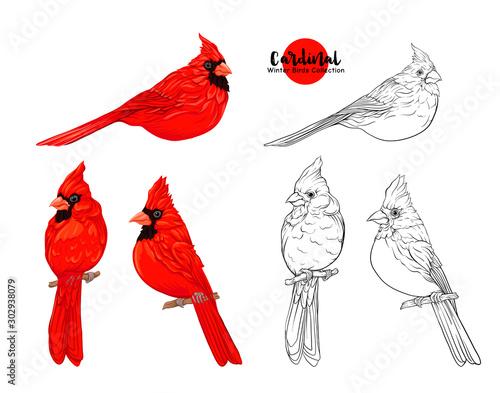 Cardinal birds - a symbol of Christmas Fototapete