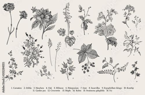 Tablou Canvas Vintage vector botanical illustration