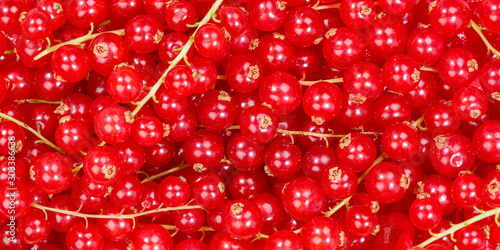Wallpaper Mural Red currants berry fruits collection food background banner berries fresh fruit