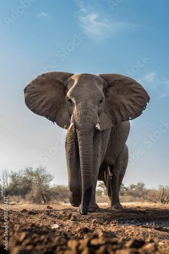 Low Angle elephant