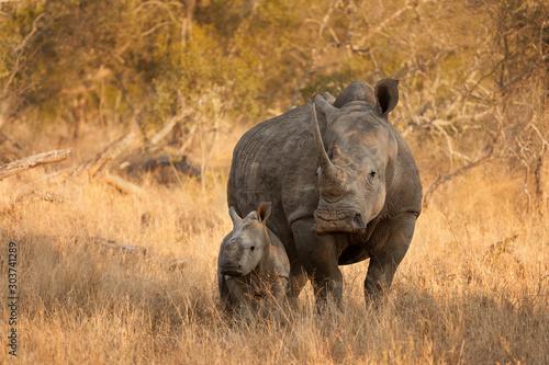 Wallpaper Mural White Rhinoceros and Baby