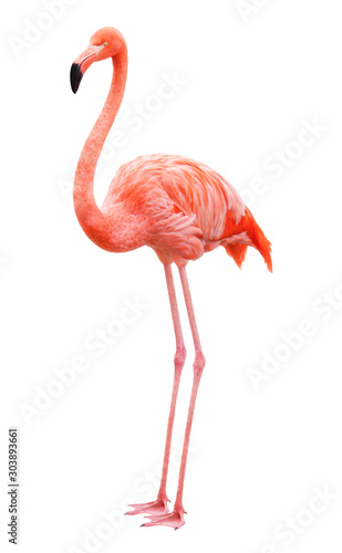 Fotografia, Obraz Bird flamingo on a white background