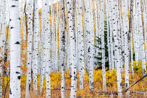 Naklejki na meble Las w stanie Kolorado