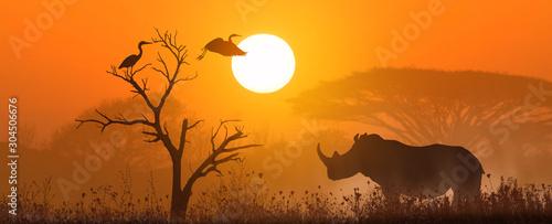 Canvas Print rhino at sunset