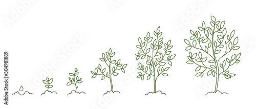 Obraz na plátně Trees, growth stages sketch