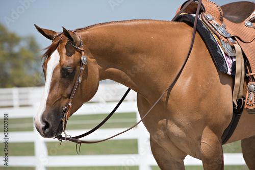 Tablou Canvas Western Horse