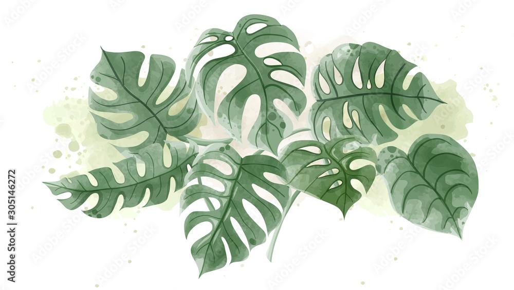 Watercolor of Monstera leaves on white background. <span>plik: #305146272 | autor: Chatchanok</span>