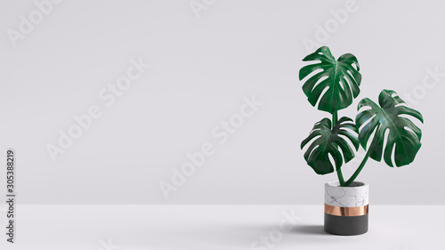 Canvas Print Monstera plant in pot isolated on white background