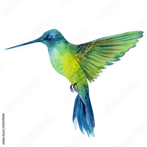 Fotografia watercolor illustration, beautiful tropical bird, hummingbird in isolated white