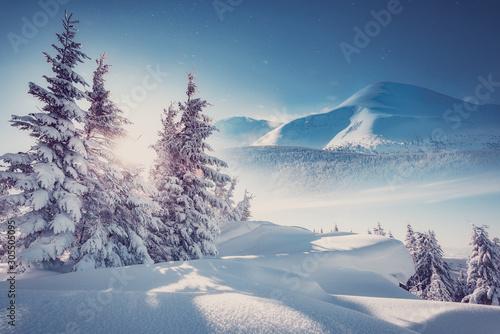 Canvas Print Majestic Carpathian Mountains in winter