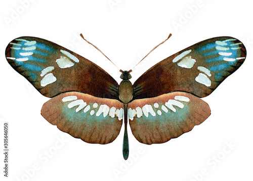 Fototapeta set of beautiful tropical butterflys on white background, watercolor illustratio