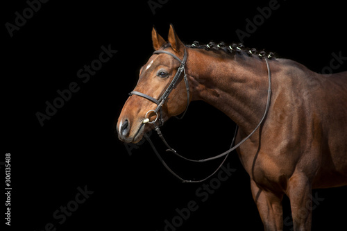 Tablou Canvas Horse portrait in bridle isolated on black background
