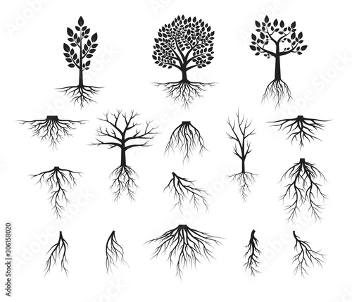 Photo Vector isolated Illustration of big set of trees with roots, forest plant silhouettes