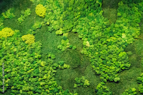Canvas Print green moss for decor in the office on the wall