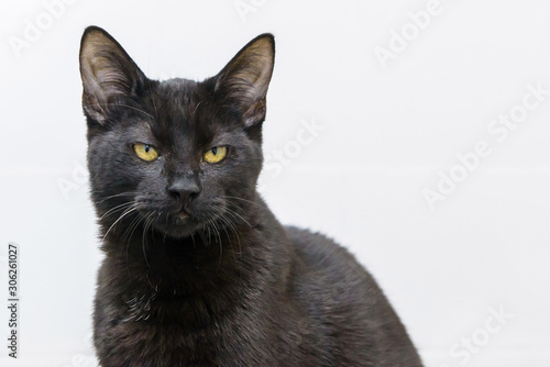 Canvas-taulu black angry face cat