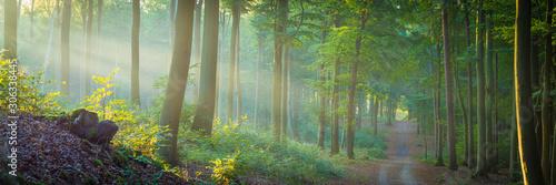 Die Sonne scheint durch Nebel in den Wald - Buchenwald Panorama