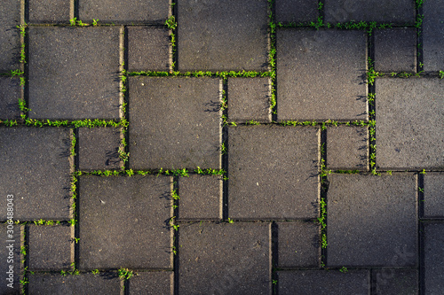 Photo Paving stones overgrown with green grass