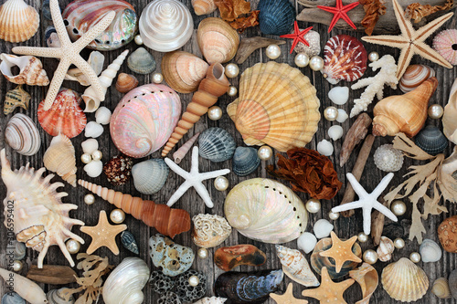 Fotografia Large collection of seashells, driftwood, pebble &  seaweed on weathered wood background Natural treasures of the sea concept