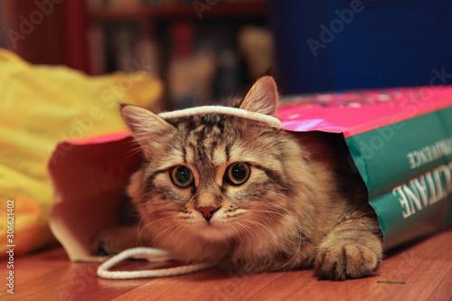 Carta da parati Striped cat peeks out of paper bag